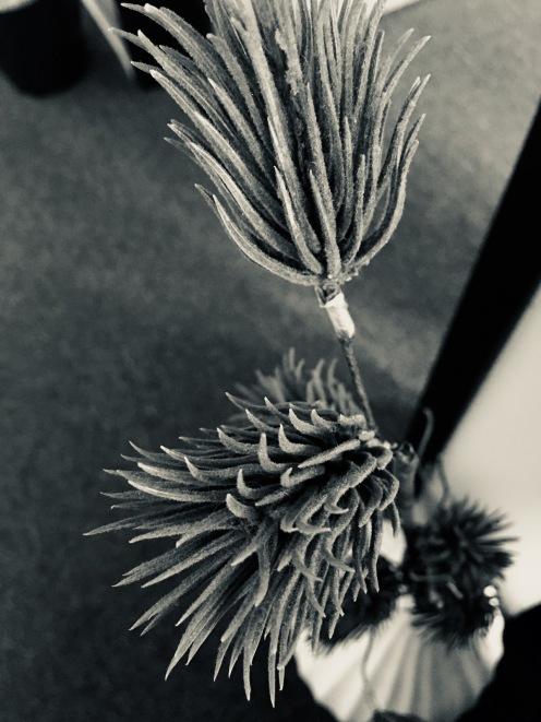 photography-workshop-MEMPlant