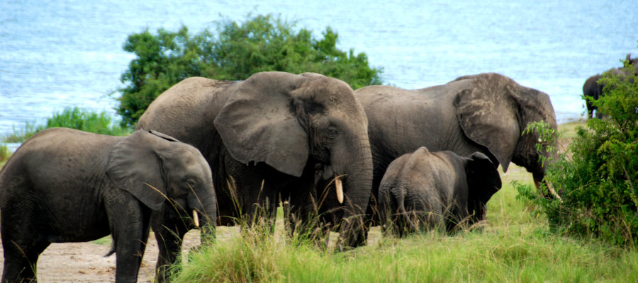 EAST AFRICA-promo-safari-elephants-900px